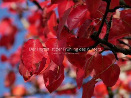 Der Herbst ist der Frühling des Winters. (Henri de Toulouse-Lautrec)