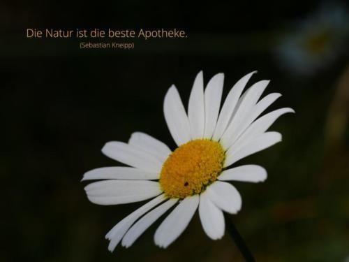 Die Natur ist die beste Apotheke.-1
