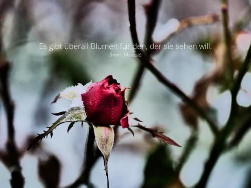 Es gibt überall Blumen für den, der sie sehen will.