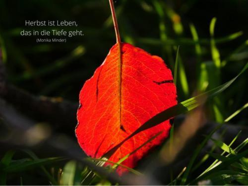 Herbst ist Leben das in die Tiefe geht